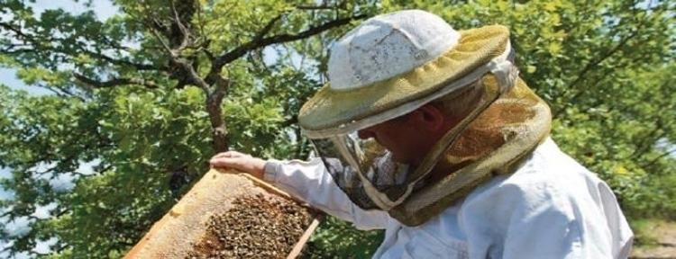Les qualités pour être apiculteur