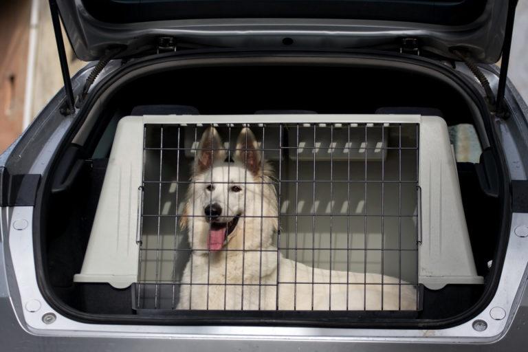 Comment transporter un chien en voiture ?